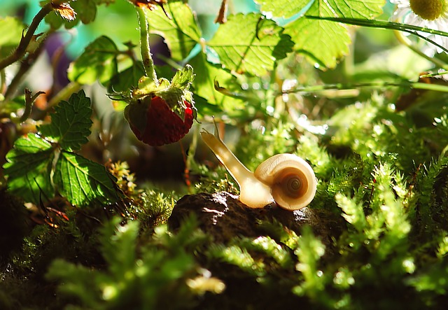 Snail, Animal, Nature, Shell, Mollusk, Garden, Slowly
