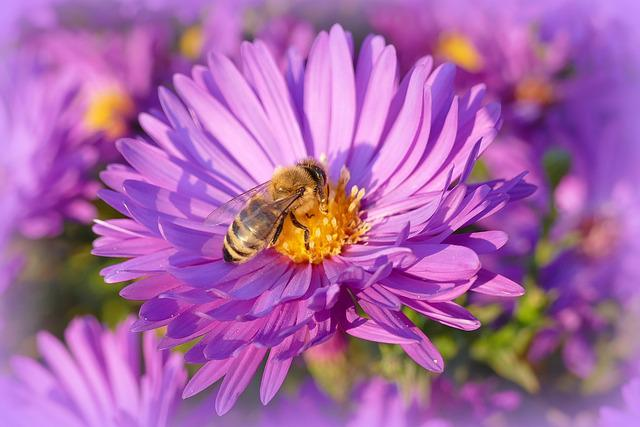 Nature, Flower, Garden, Nature Flower