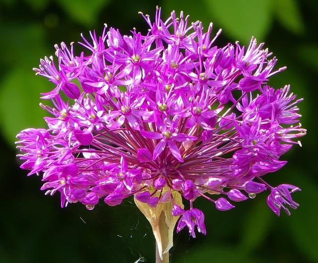Nature, Flower, Plant, Summer, Garden, Flowers, Floral