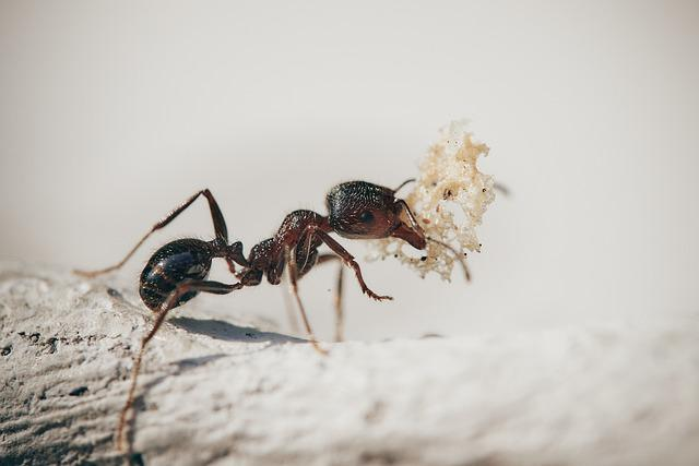 Fourmie, Macro, Insects, Nature, Plants, Ant, Garden