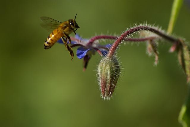 Nature, Bee, Flower, The Pods, Garden