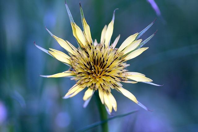Flower, Yellow, Garden, Alsace, Summer, Nature