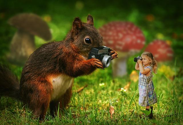 Squirrel, Girl, Camera, Nature, Animal, Child, Cute