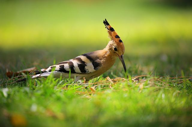 Animal, Avian, Bird, Cute, Grass, Nature