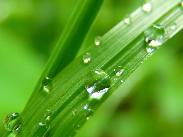 Drop Of Water, Drip, Close Up, Grass, Green, Nature