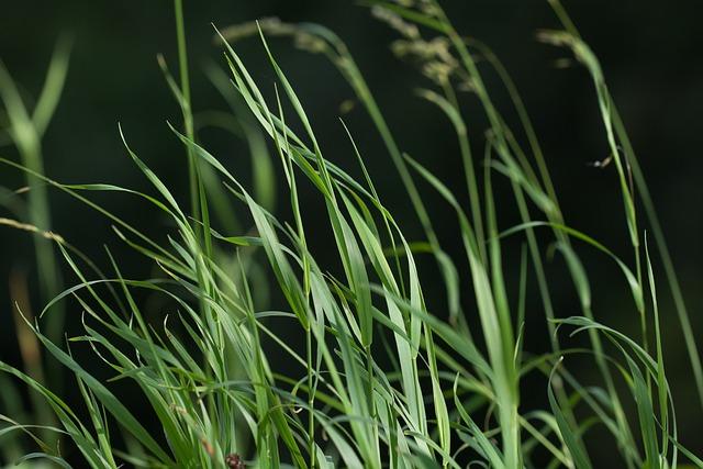 Grass, Green, Grasses, Plant, Nature, High Grass