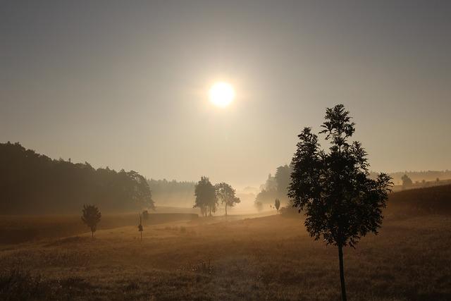 Fog, Foliage, Grass, Hilly, Landscape, Misty, Nature