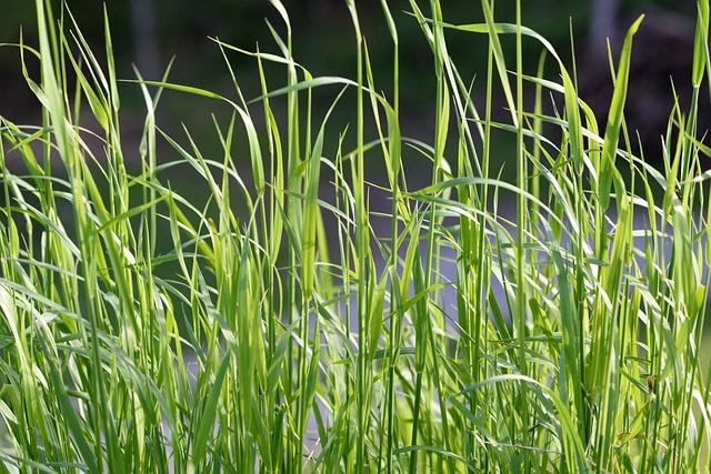 Grass, Needle Grass, Juicy, Green, Nature, Close