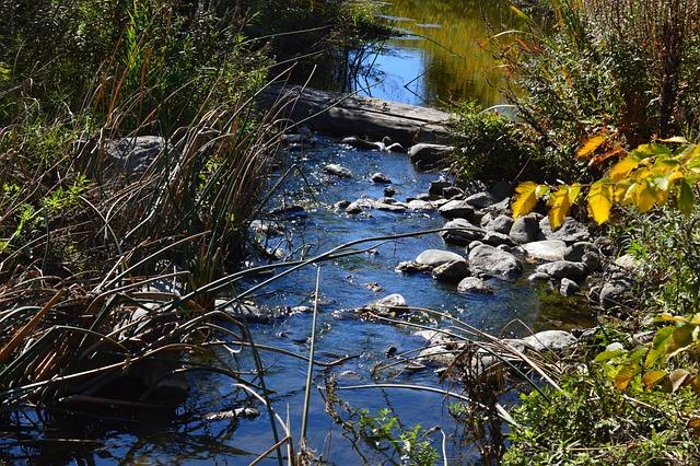 Stream, Creek, Water, Nature, Rocks, Grass, Landscape