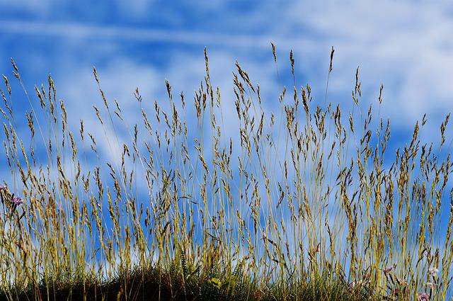 Sky, Blue, Clouds, Grass, Nature, Cloudy, Sky Blue