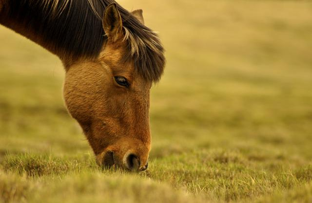Horse, Graze, Pasture, Grazing, Grass, Nature, Mammal