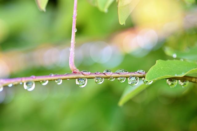 Raindrop, Nature, Green, Plant, Halme, Close, Drip