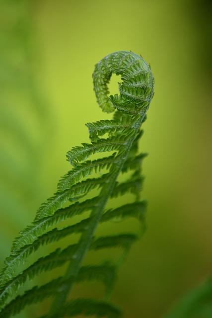 Sheet, Fern, May, Nature, Green, Flora, Forests