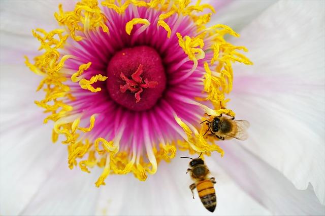 Flower, Nature, Summer, Green, Honey, Red, Spring