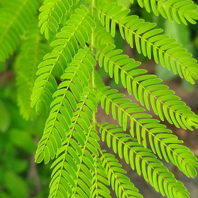 Leaf, Fern, Nature, Flora, Growth