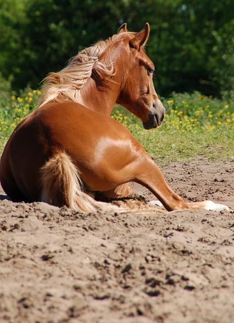 Mammals, Animal Kingdom, Nature, Horse, Lying