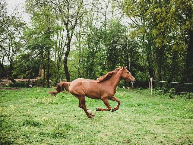 Mare, Horse, Prairie, Nature, Horseback Riding, Animals