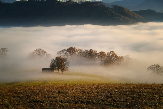 Trees, Fog, Field, Meadow, Forest, Hut, Autumn, Nature