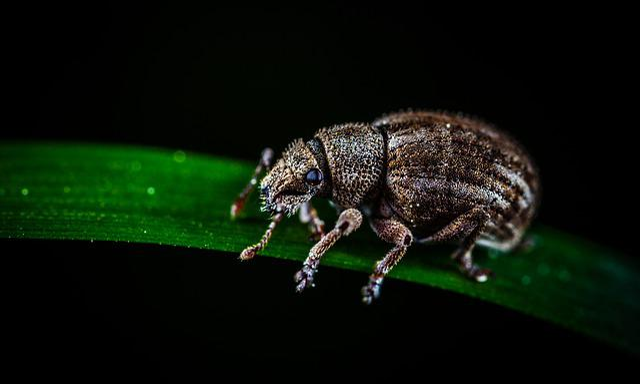 Beetle, Insect, Bespozvonochnoe, Nature, Living Nature