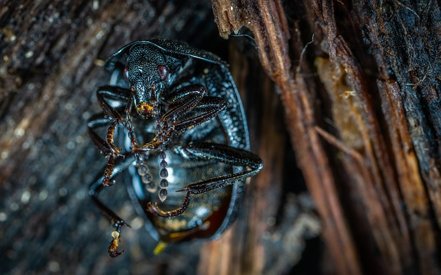 Insect, Bespozvonochnoe, Nature, Wood, Beetle
