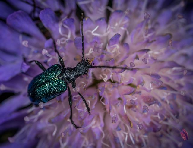 Insect, Bespozvonochnoe, Nature, Flower, Krupnyj Plan