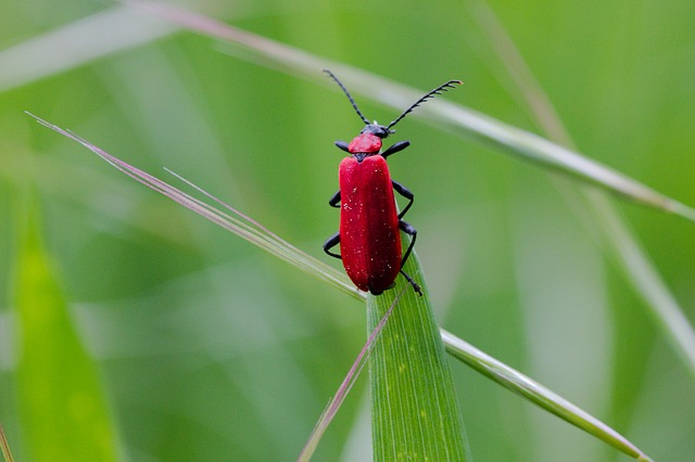 Nature, Insect, Summer, Leaf, Plant, Animal World