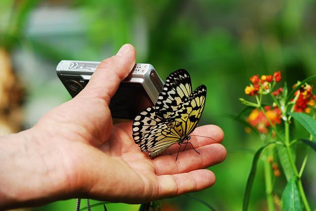 Nature, Butterfly, Insect, Summer, Plant, Photograph