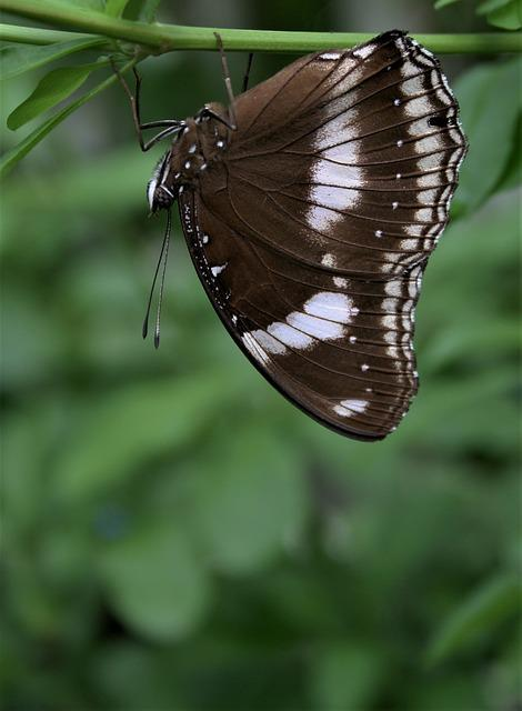 Insect, Nature, Outdoors, Butterfly, Wildlife