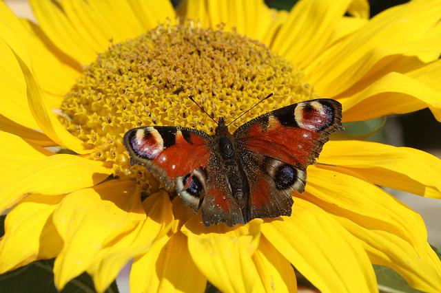 Yellow, Butterfly, Insect, Closeup, Nature
