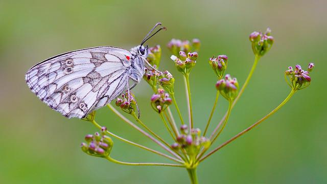 Butterfly, Macro, Nature, Colored, Insects, Lepidoptera