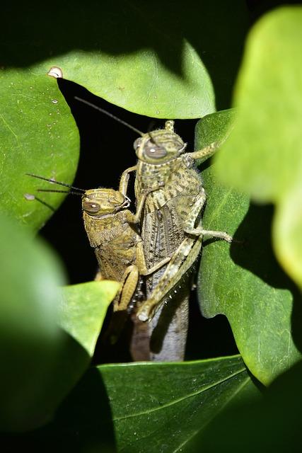 Nature, Invertebrate, Insect, Wild Life