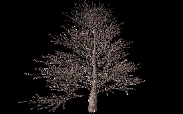 Tree, Isolated, Autumn, Digital Art, Nature