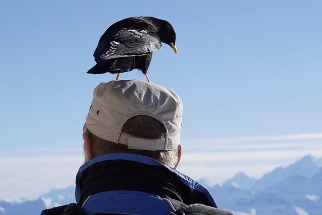 Bergdohle, Jackdaw, Winter, Bird, Black, Nature, Sky