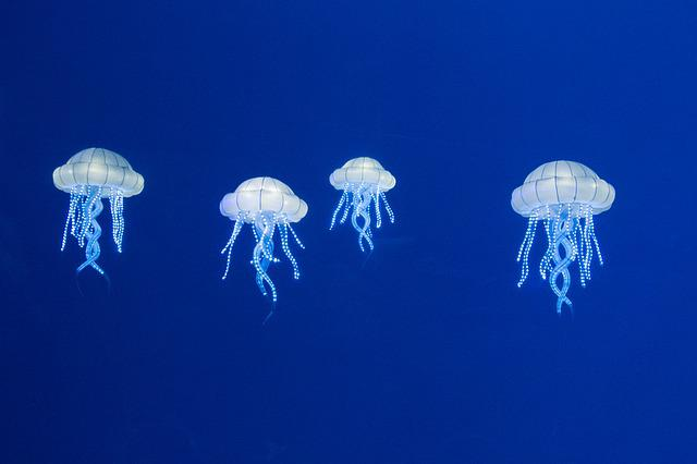 Burgers Zoo, Nature, Animals, Jellyfish