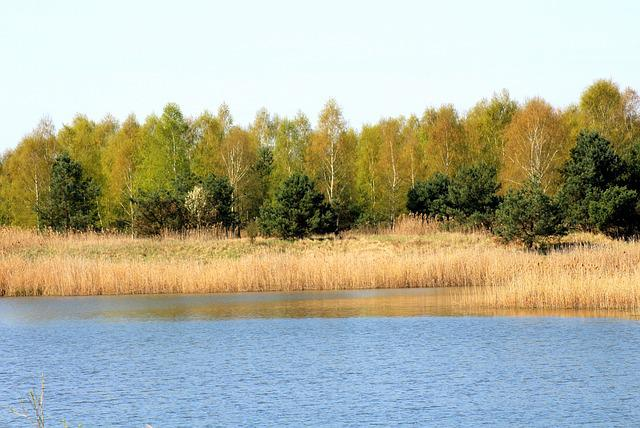 Spring, Landscape, Lagoon, Water, Tree, Nature