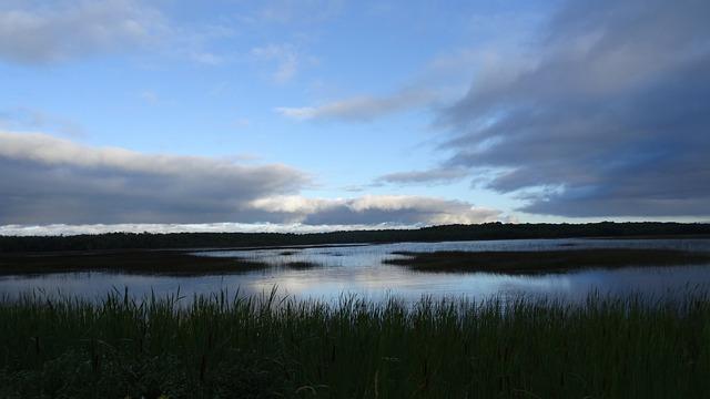 Moor, Reed, Nature Reserve, Swamp, Nature, Lake, Pond