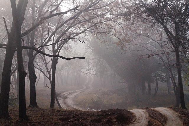 Dirt Road, Fog, Mist, Forest, Wood, Nature, Landscape