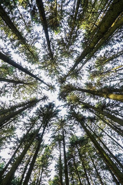 Tree, Wood, Nature, Leaf, Plant, Park, Landscape