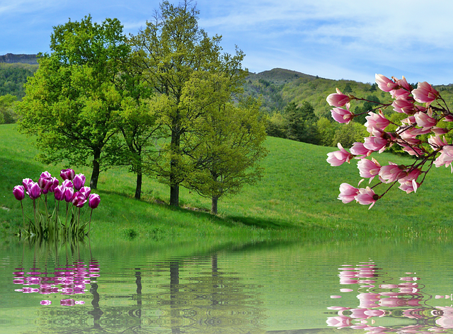 Spring, Tulips, Nature, Landscape, Branches, Plant