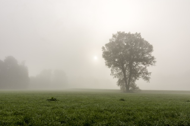 Fog, Tree, Landscape, Forest, Nature, Mysterious