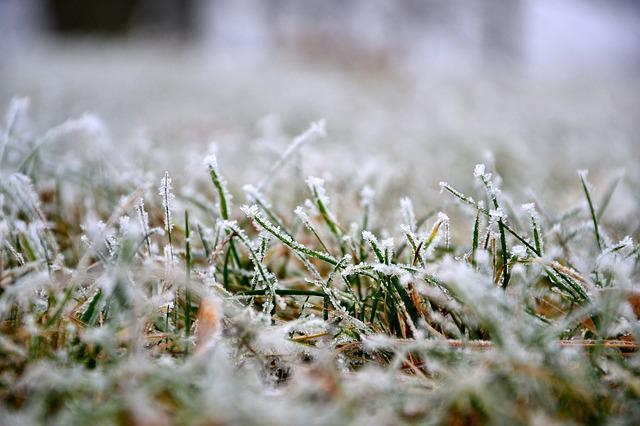Grass, Lawn, Winter, Frost, Nature