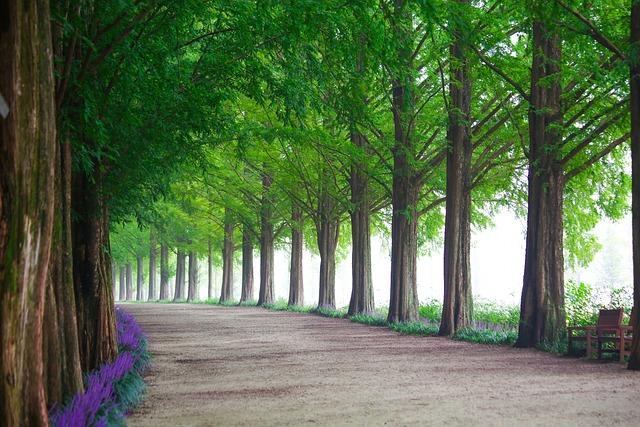 Wood, Nature, Leaf, Park, Avenue