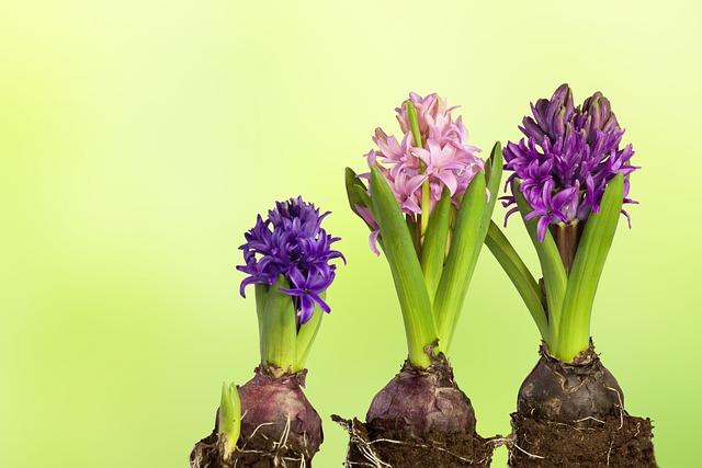 Nature, Plant, Leaf, Flower, Easter, Growth, Hyacinth