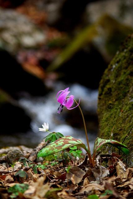 Nature, Outdoors, Plants, Leaf, Flowers, Wildflower