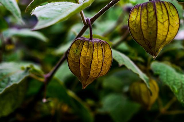 Leaf, Nature, Fruit, Food