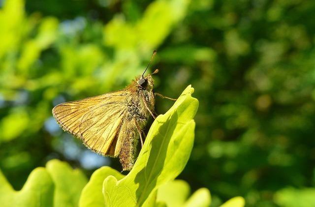Nature, Plant, Leaf, Summer, Garden, Forest