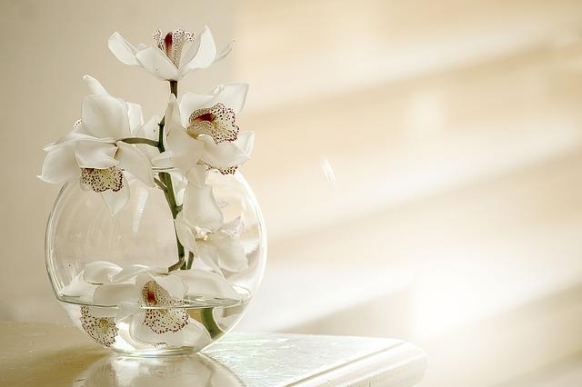 Orchid, Nature, Flower, Vase, Summer, Elegant, Leaf