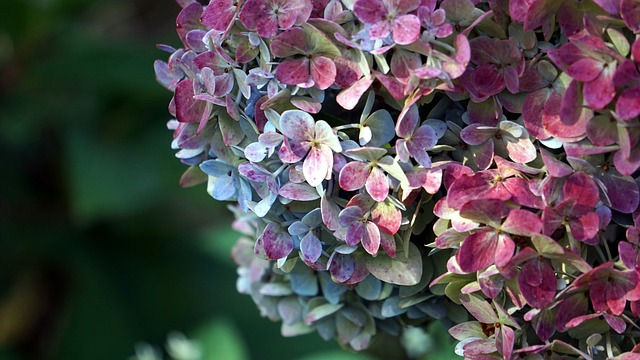 Nature, Flower, Plant, Garden, Leaf