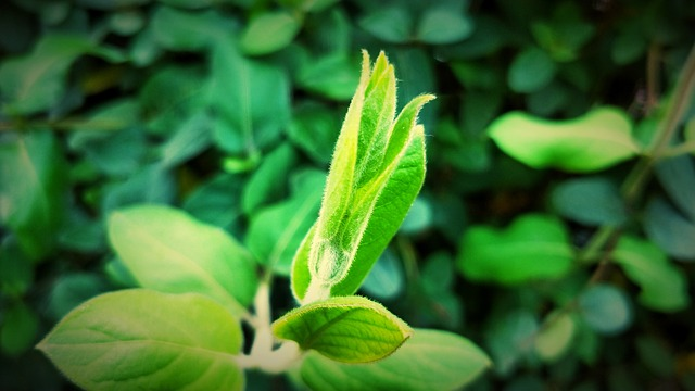 Leaf, Plant, Nature, Kinds Of Food