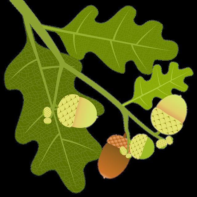 Oak, Acorns, Branch, Leaves, Nature, Tree, Tree Fruit
